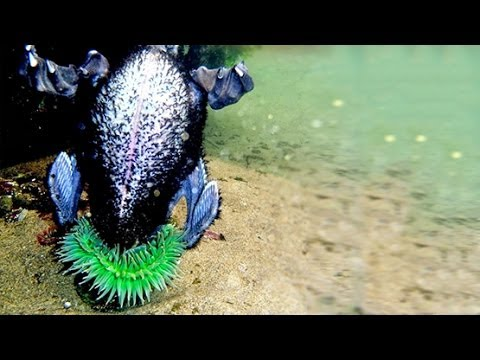 SEA ANEMONE EATS BIRD
