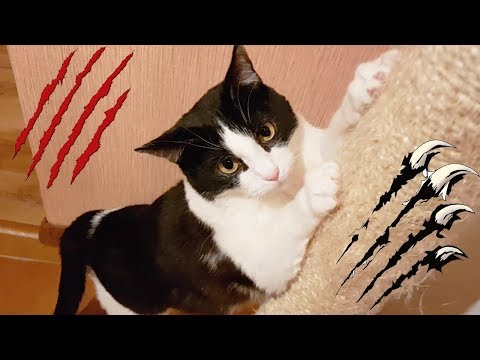 How to train your cat not to scratch furniture