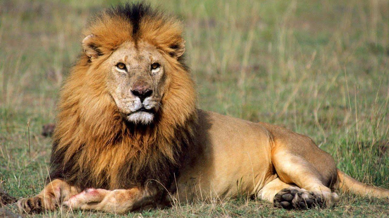 Top 10 Strongest Land Animals