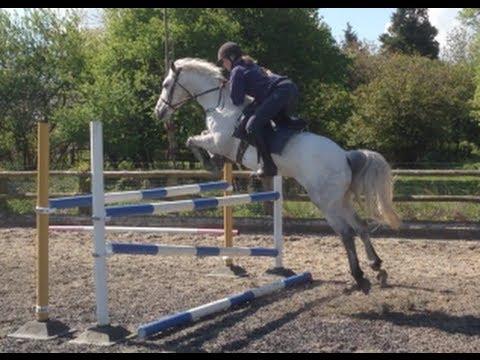 14.1 BSJA pony SOLD - Summerhouse show jumping