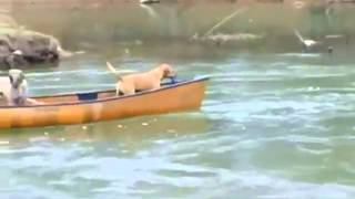 Собака спасатель - спасла собак! :-)