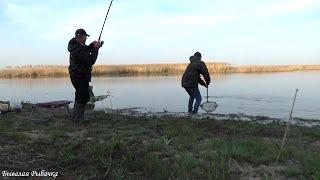 КУДА СТОЛЬКО РЫБЫ Поймала Серёгу Рыбалка Нерест карася