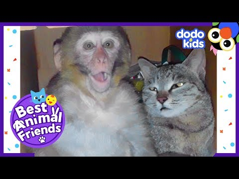 Billo The Cat Is Best Friends With A Monkey Named Avni   Dodo Kids: Best Animal Friends