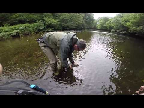 Grayling Fishing On The River Irfon, Wales, June 2017