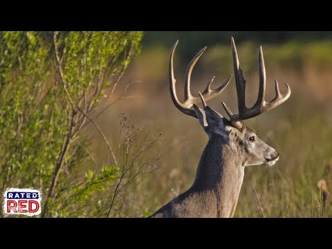 The Three Worst States For Whitetail Bucks