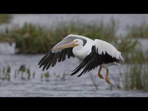 Day at Viera Wetlands