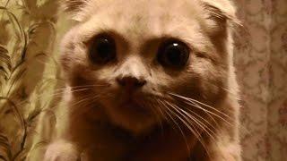 Кормление кошки костями. Подавился котенок(Кормление кошки костями, что может случится если кошке давать термически обработанные кости. В ролике в..., 2015-10-23T15:40:43.000Z)