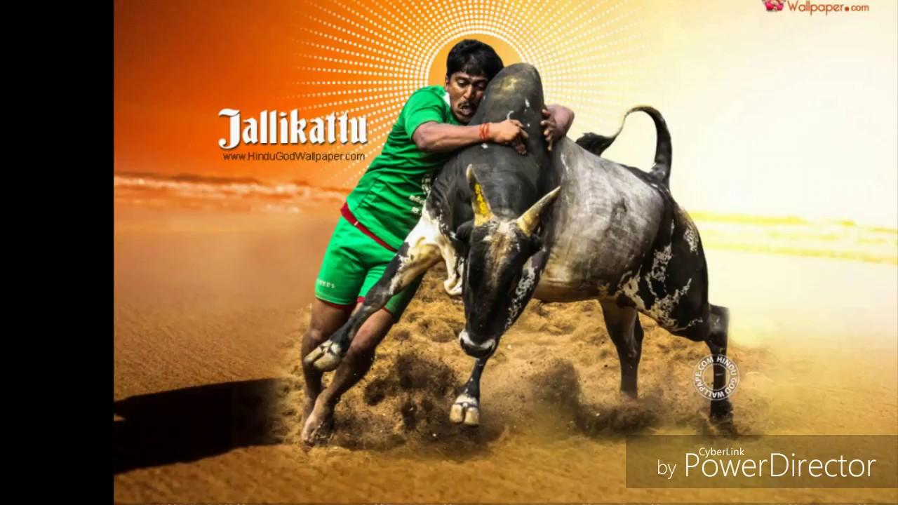 Jallikattu Kaalai Wallpapers With Quotes Jallikattu Youtube