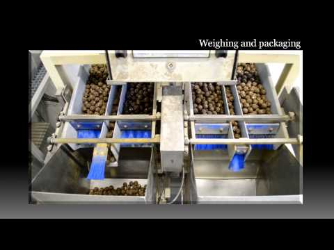 KCB International - The ultimate fish food supplier