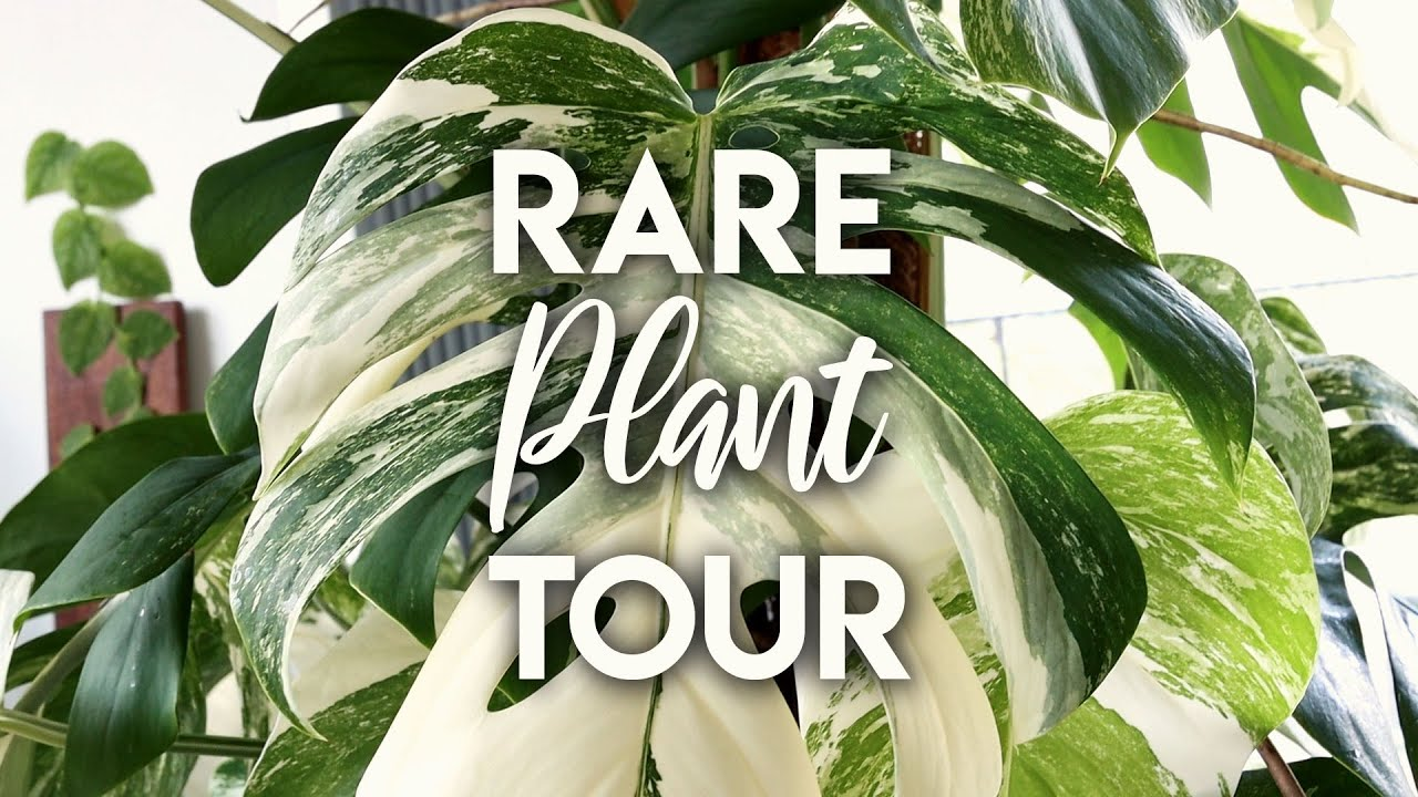 Summer 2020 Rare Houseplant Tour! | My Rare Houseplant Collection
