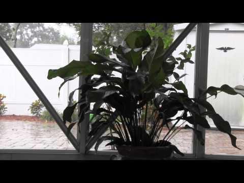 Relaxing Rain Sounds With Soft Birds - Florida Rain Shower