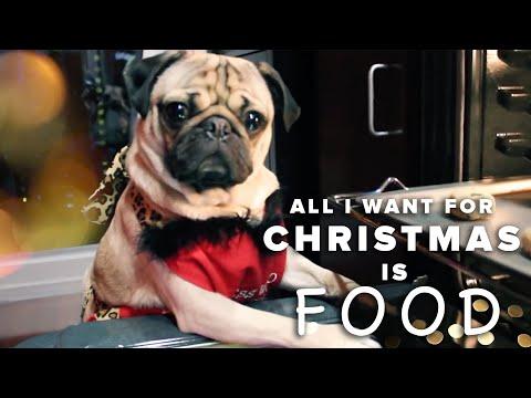All I Want For Christmas Is Food  Doug The Pug