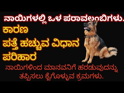 Kannada dog training- internal parasites in dogs , cause and control.ನಾಯಿಗಳಲ್ಲಿ ಒಳಪರಾವಲಂಬಿಗಳು