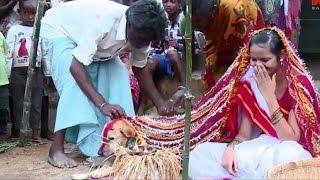 HEBOH!! Gadis Ini Terpaksa Jalani Ritual PERNIKAHAN Aneh