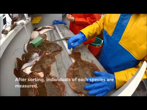 What is a trawl survey?