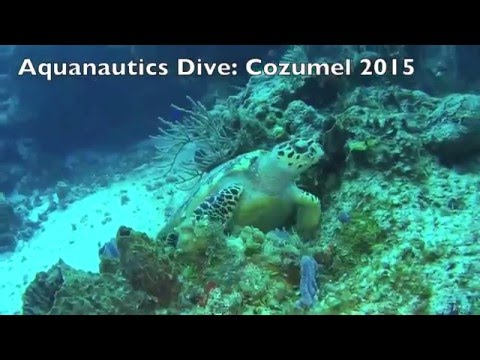 Aquanautics Dive: A Sea Turtle moment in Cozumel