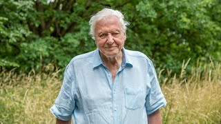 A Message From Sir David Attenborough | A Perfect Planet | BBC Earth