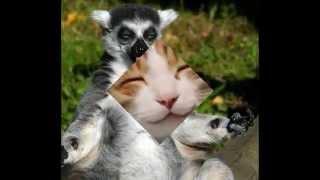 Śmieszne Zwierzęta 004