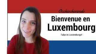 Talpa tricolore si trasferisce in LUSSEMBURGO! | Occhiochevivedo