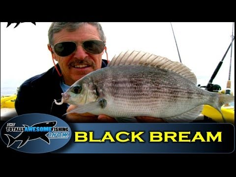 How To Catch Black Bream  - The Totally Awesome Fishing Show