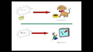 条件反射の心理学の実験で有名なパブロフの犬。そのパブロフの犬の実験...