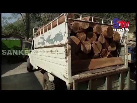 Odisha : Fine quality timber worth lakhs seized in Balasore   Sanket Tv
