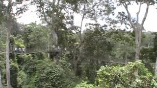 Jungle Walk - Kakum National Park, Ghana, Africa   Part 1