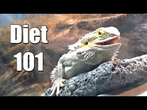 The Healthiest Diet for Adult Dragons