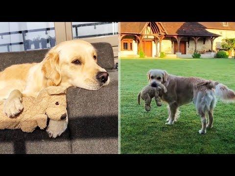 Эта собака всюду носит с собой свою игрушечную копию