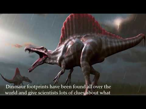 Top 10 fact about Dinosaurs