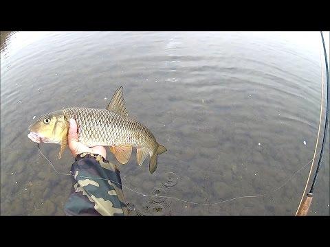 nureunmineul's fly fishing (deudeul river 20161106)