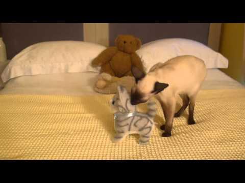 Siamese Kitten and singapura kitten vs Kitty Toy