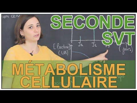 Définition du métabolisme cellulaire - SVT Seconde - Les Bons Profs