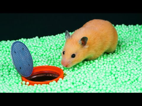 ?AWESOME HAMSTER MAZE with TRAPS ?[Obstacle Course]?