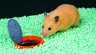 🐹AWESOME HAMSTER MAZE with TRAPS 😱[Obstacle Course]😱
