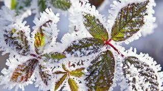 Первый снег детская новая  песня на слова Валерия Брюсова