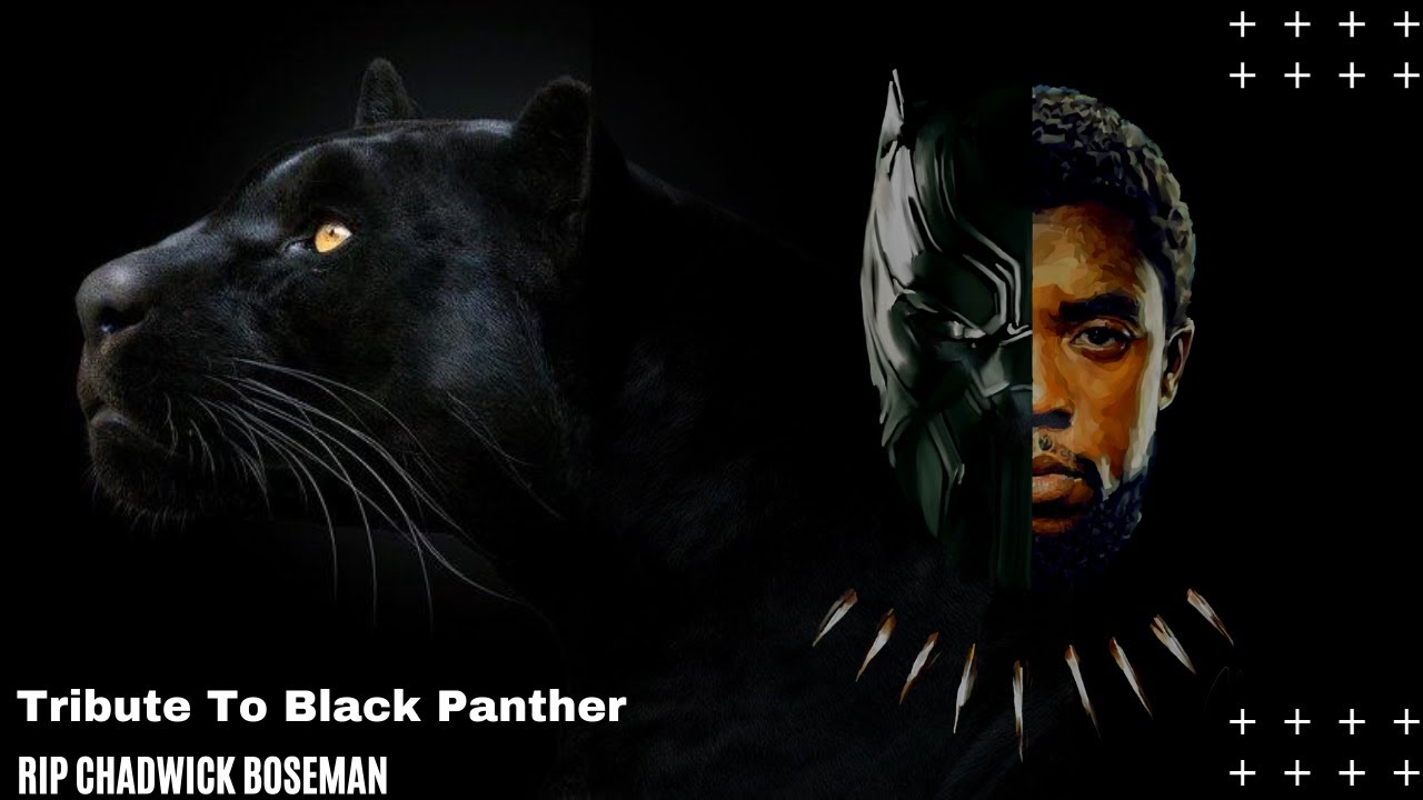 Actor Chadwick Boseman Rip Tributes Black Panther In Marvel Cinematic Universe Youtube