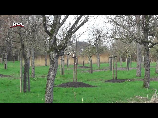 Nieuwe aanplant van fruitbomen in Landgoed Bredius