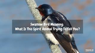 Swallow Bird Meaning: What Is This Spirit Animal Trying To Tell You?