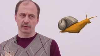 Мусорное биомоделирование. Моллюски. Часть 1 - Брюхоногие.