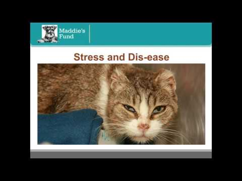 How Stress is Sabotaging Your Cat Adoption Efforts