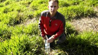 Farmstay in Brazil - using Coke PET bottles to make Vetiver plant drippers