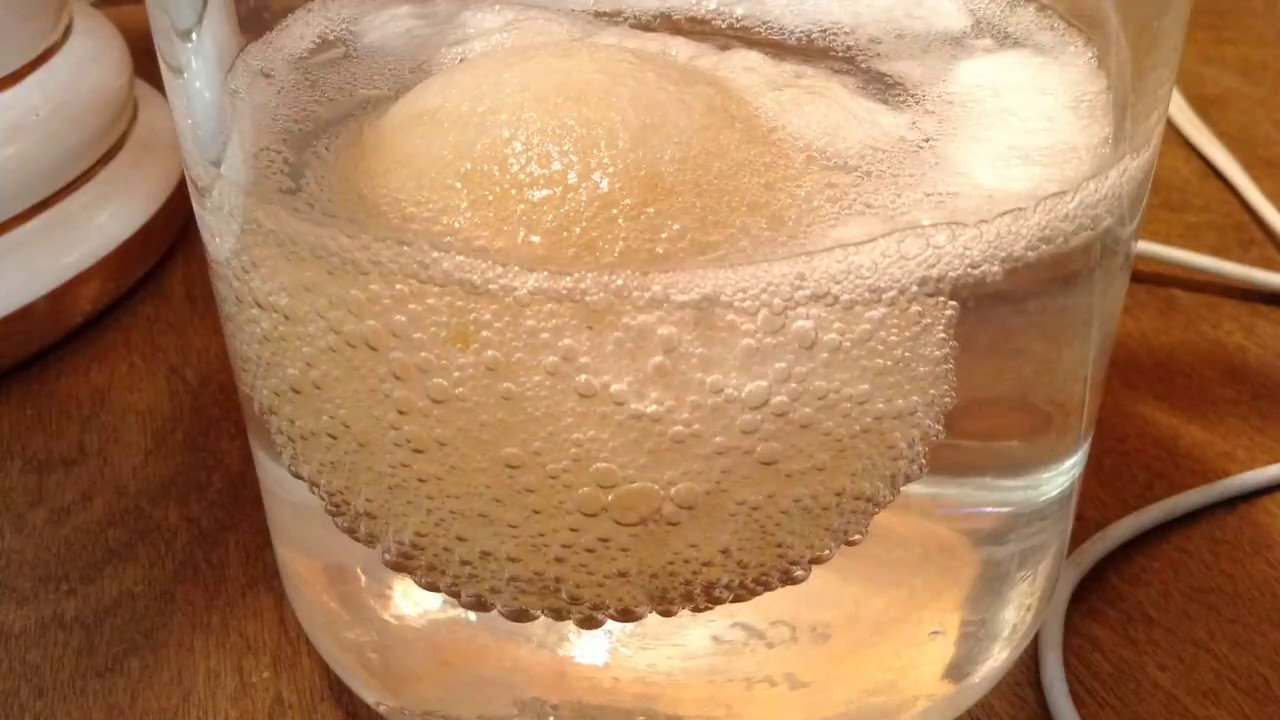 Egg in Vinegar - Step 1 Osmosis Experiment - YouTube