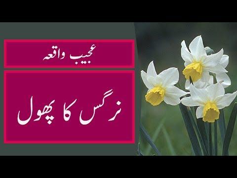 Islamic Waqia In Urdu Nargis Ka Phool 2017 Youtube