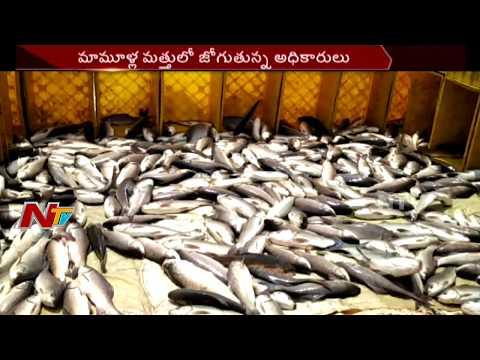 Illegal Fish Farming in Kolleru River || Support Politicians || NTV