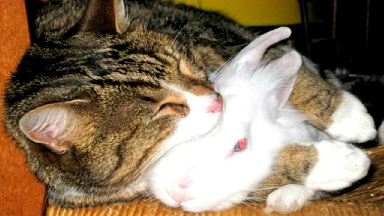 информацией том, фото котенок спит с кроликом еще