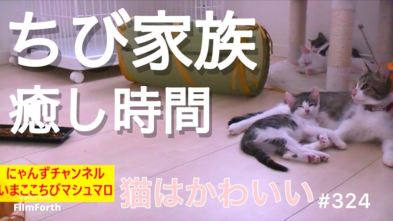 【子猫の日常動画】324 ちび家族癒し時間 猫はかわいい [Daily video of kittens] 324 Chibi family healing time Cats are cute