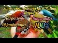Suara Pikat Semua Jenis Burung Kecil Paling Ampuh Di Jamin Dapet   Mp3 - Mp4 Download