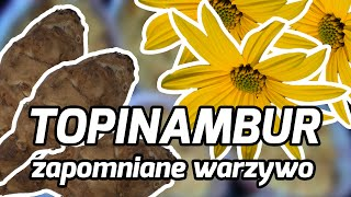 Zapomniane warzywa: TOPINAMBUR - FOODhacker #13