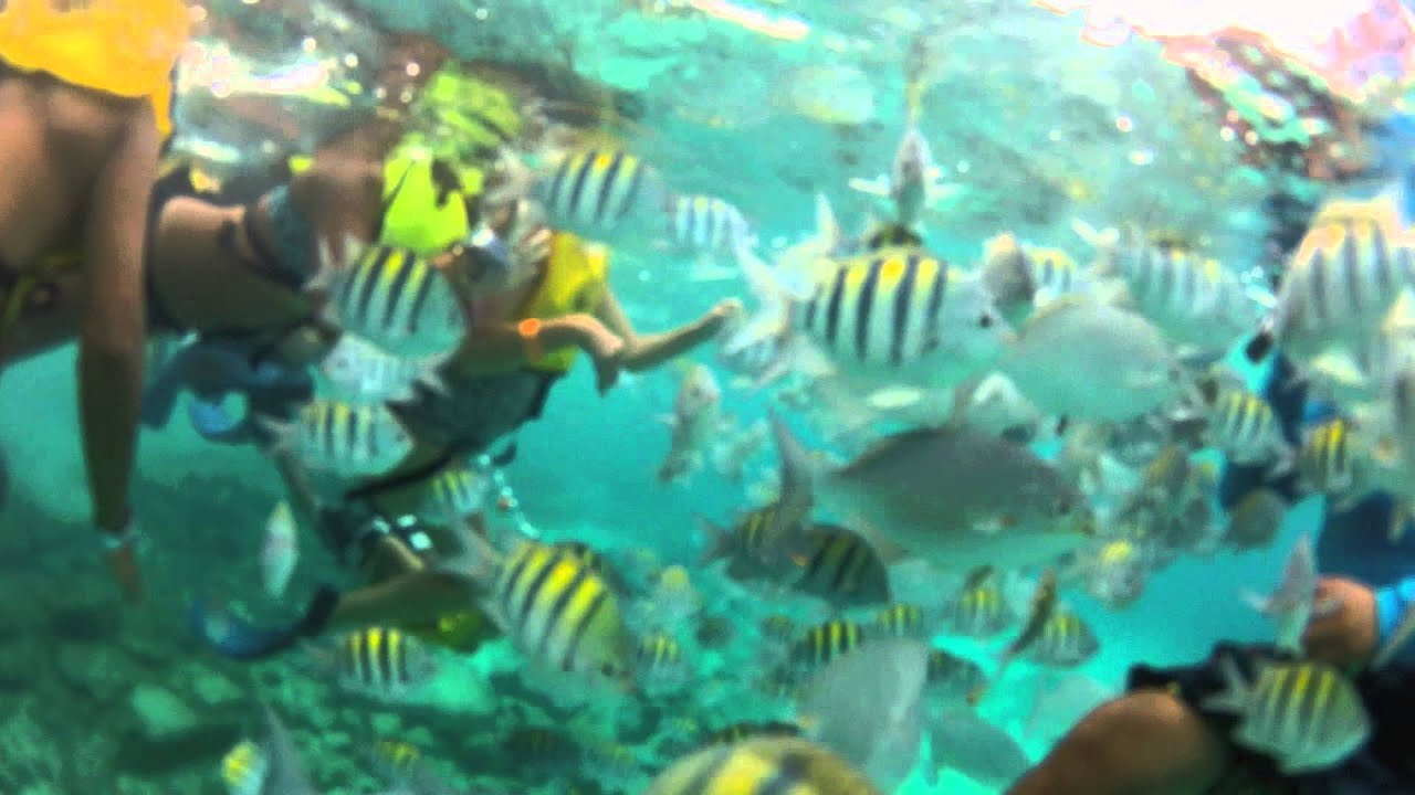 Cozumel Palace, Mexico 2015 - Snorkeling GoPro HD - YouTube